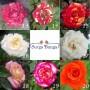Paket 10 Bunga Mawar (1000 gram)